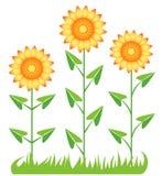 Drie zonnebloemen. Stock Afbeelding