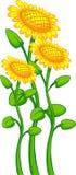 Drie zonnebloemen Royalty-vrije Stock Afbeeldingen