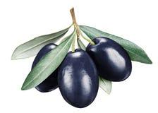 Drie zwarte rijpe olijfbessen met bladeren royalty-vrije stock afbeelding