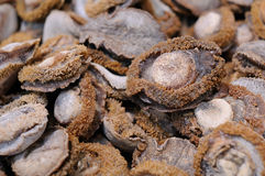 Dried abalone Stock Photo