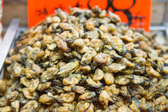 Dried abalone for Chinese medicine. Raw material Royalty Free Stock Image