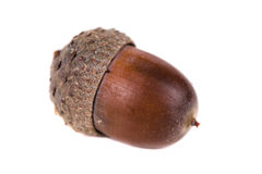 Dried acorn Royalty Free Stock Images