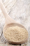 Dried active yeast on a spoon Royalty Free Stock Image