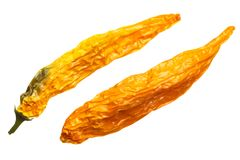 Dried Aji Giallo Arancio C baccatum, top, paths. Dried Aji Giallo Arancio Capsicum baccatum. Top view, clipping paths Royalty Free Stock Images
