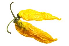 Dried Aji Pineapple C baccatum, top, paths. Dried Aji Pineapple pepper Capsicum baccatum. Top view, clipping paths Stock Photos