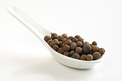 Dried allspice fruits Stock Images