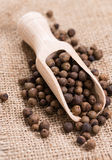 Dried Allspice (selective focus) Stock Images