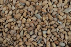 Dried almonds in shell stock photos
