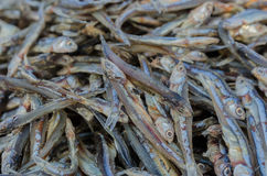 Dried anchovy dry by the sunlight Stock Images