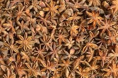 Dried aniseeds Royalty Free Stock Photo