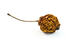 Dried apple. Dried little apple with tail Royalty Free Stock Images