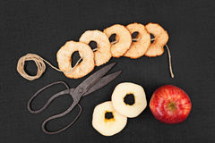 Dried apples. Royalty Free Stock Photo