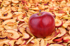 Dried apples. One ripe red apple lying on a large amount of dried apples Royalty Free Stock Photography