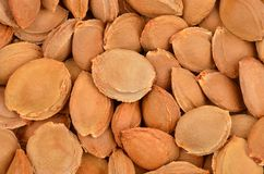 Dried apricot kernel Stock Photos