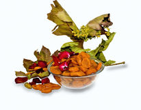 Autumn Fantasy. Dried apricots and dried leaves of oak and maple photographed on a white background Stock Images