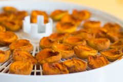 Food dryer with Dried Apricots on a table stock images