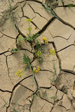 Dried arable land, crop loss stock image