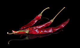 Dried Arbol chilli pepper. Dried Arbol chilli pepper  on black background with reflection Royalty Free Stock Photo
