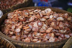 Dried Ripe Areca betel palms, Dried betel nuts royalty free stock photo