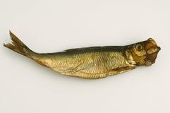 Dried aringa fish isolated on white Stock Photos