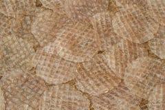 Dried Arius thalassinus sheets Stock Photography