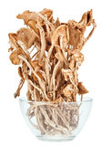 Dried armillaria mushrooms in a glass bowl Royalty Free Stock Images