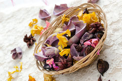 Dried aromatic plants Stock Image