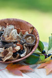 Dried Asia Mushrooms royalty free stock photo