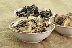 Dried asias mushroom mix Stock Image