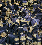 Dried aubergine or eggplant Stock Images