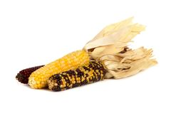 Dried autumn corn husks isolated on white Stock Images