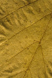 Dried Autumn Leaf Stock Photography