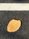 Dried autumn leaf on a road background. Abstract background of autumn leaves. Autumn background. Autumn leaves over grey backgroun Stock Photos