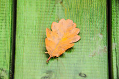 Dried autumn leaf on table Royalty Free Stock Images