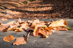 Dried autumn leaf on table Royalty Free Stock Photo