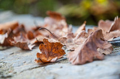 Dried autumn leaf on table Stock Photo