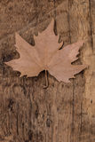 Dried autumn leaf on wooden surface Stock Photography