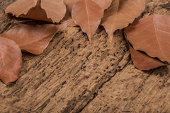 Dried autumn leafs as a border Royalty Free Stock Photo
