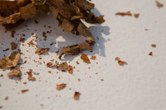 Dried autumn leave Royalty Free Stock Photo