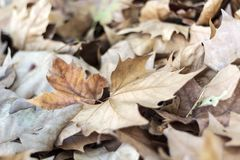 Free Dried Autumn Leaves Stock Photo - 164386910