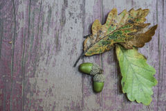 Dried autumn leaves and acorn on wooden background Royalty Free Stock Photography