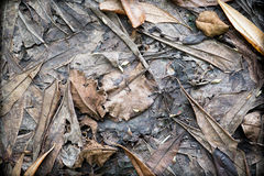 Dried autumn leaves Royalty Free Stock Photos