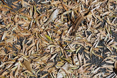 Dried autumn leaves Stock Photo