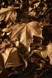 Dried autumn leaves on the ground stock image