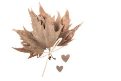 Dried autumn leaves and hearts on white Royalty Free Stock Photo