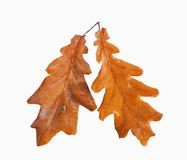 Dried autumn leaves isolated Stock Photos
