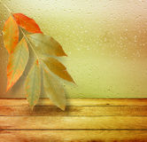 Dried autumn leaves lying on the background Royalty Free Stock Photos