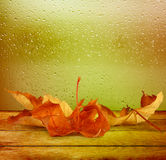 Dried autumn leaves lying on the background Stock Photo