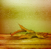 Dried autumn leaves lying on the background Royalty Free Stock Image