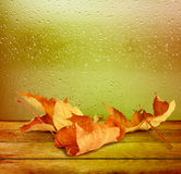 Dried autumn leaves lying on the background Stock Images
